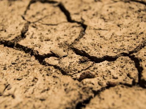Ötszáz éve nem volt a jelenlegihez mérhető szárazság Csehországban