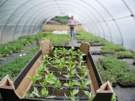Saját magunk is termelhetünk otthon egészséges zöldségeket