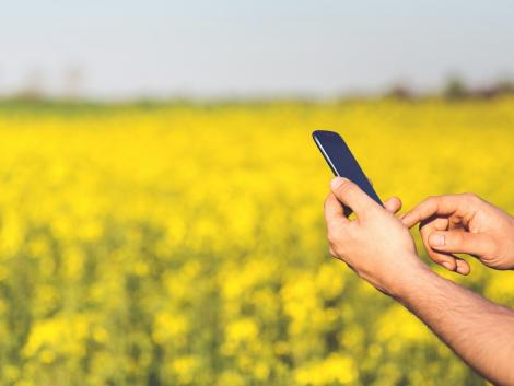 Ezek a magyar agrár startupok nem aprózzák el: a cél egyenesen az amerikai piac