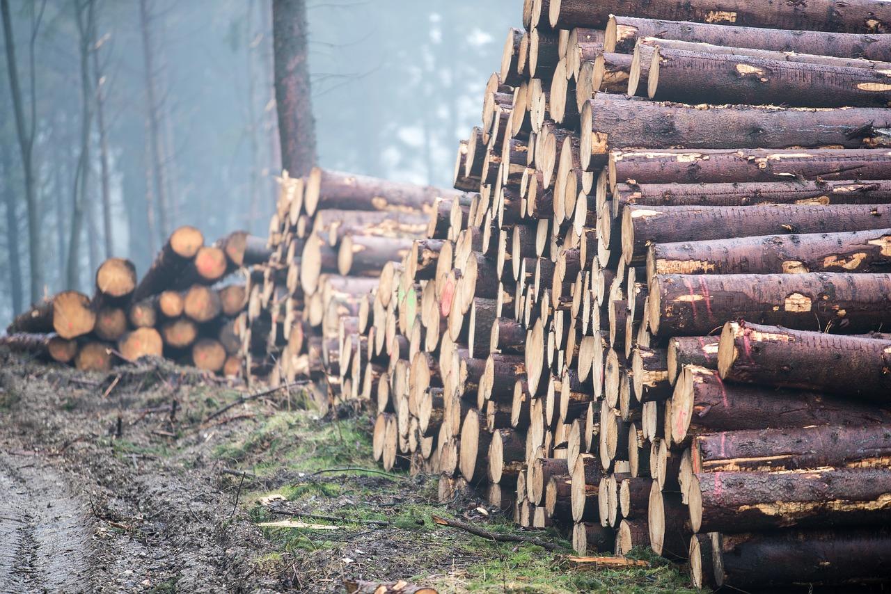 fakitermelés farakás erdő