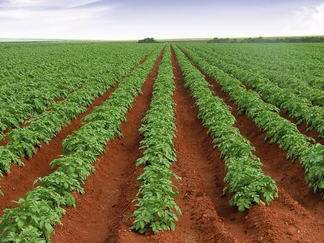 AXIÁL Vantage – szolgáltatások a szakszerű precíziós gazdálkodásért