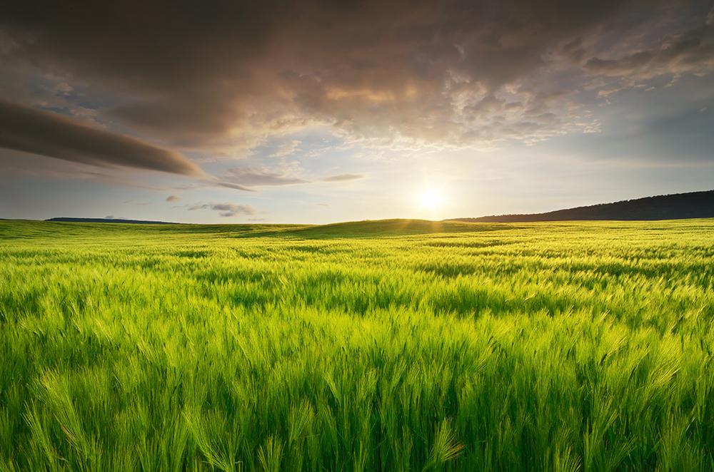 kalászos növényvédelem