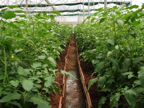 Nem érdemes kimaradni: soha nem látott fejlesztési hullám indulhat a kertészeti ágazatban