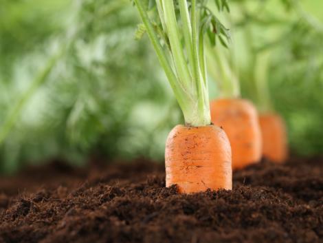 A zöldségtermesztés aktuális helyzete