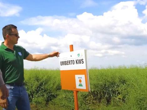 Piacvezető repce, amely a gazda saját üzemi kísérletében is kiválóan teljesített! – VIDEÓ