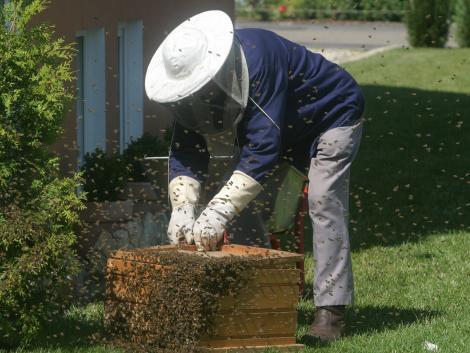 Több mint 10 ezer méh szabadult el egy közúti balesetben