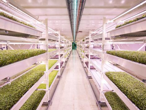Elhagyatott óvóhelyek és metróalagutak: a városi zöldségtermesztés jövője