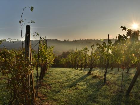 Fejlesztenek a szőlősgazdák: 1536 hektár borszőlőültetvény újul meg