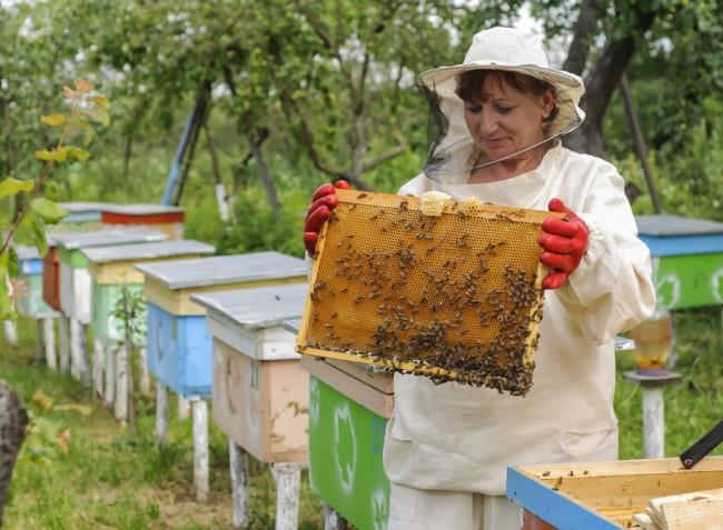 Megemeli a méhészek támogatását az Európai Bizottság