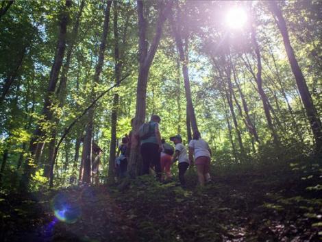 Fontos az erdők megóvása, gyarapítása