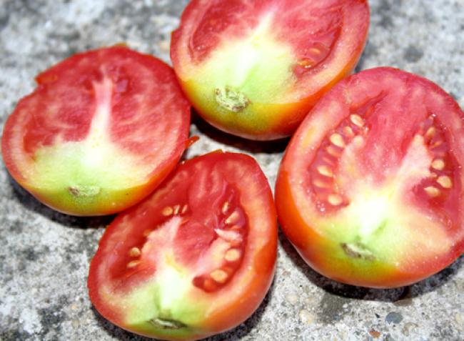 Amikor nem a tápanyaghiány a gond – mely tényezők befolyásolják a növények tápanyagfelvételét?