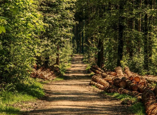 Megmenekülhetnek a védett területek – az Alkotmánybíróság elkaszálta a megújított erdőtörvényt