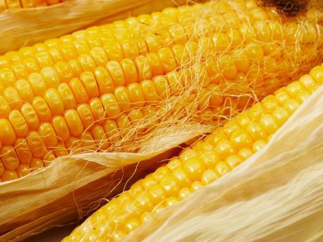 Durván visszaesett az Egyesült Államok kukorica felhasználása