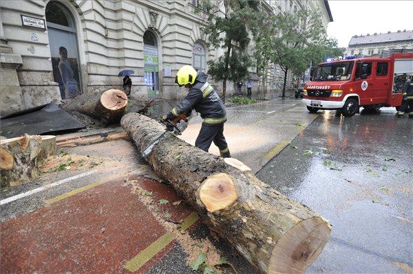 kidőlt fa