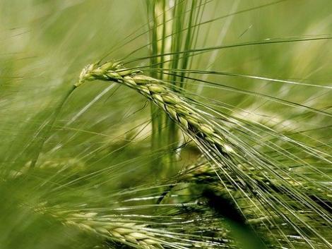 Itt a segítség az agronómiától a terményfelvásárlásig! Vágj bele a sörárpatermesztésbe! – VIDEÓ