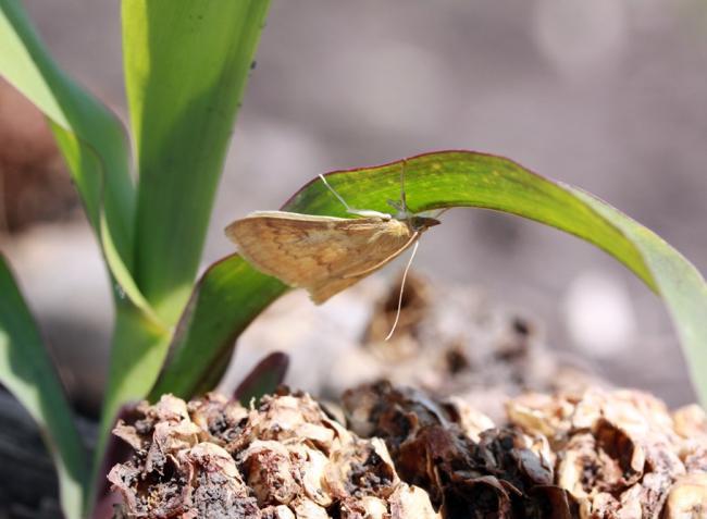 Elszaporodtak a kártevők, de a hamis növényvédő szerek is