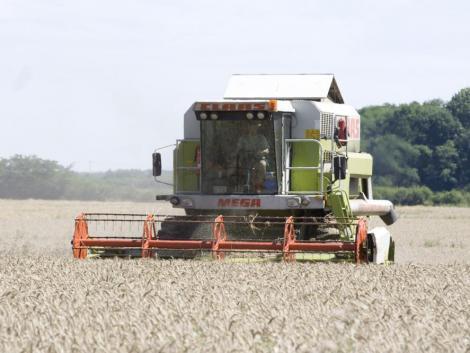 Nagy a bizonytalanság a búzatáblák körül – heteket csúszhat az aratás