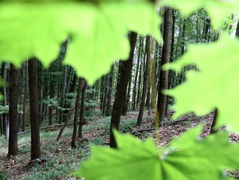 Elérhető útmutatók az erdőgazdálkodók és erdészeti szakirányítók számára