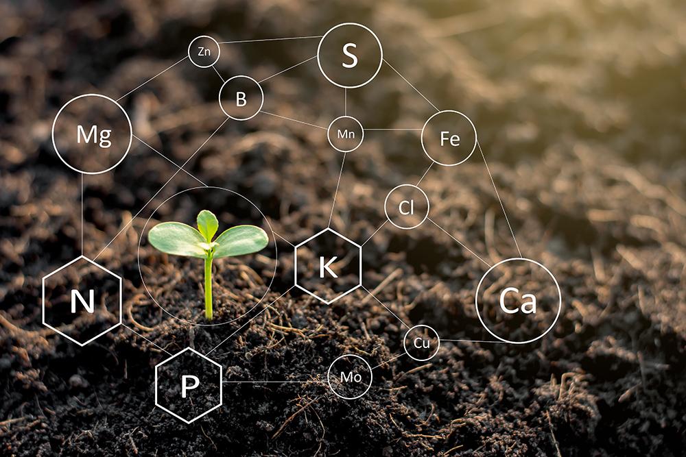 talajjavítás