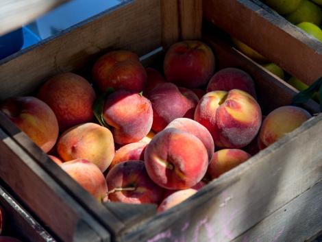 Zsinórban harmadik éve űz kegyetlen tréfát az időjárás a gyümőlcstermesztőkkel
