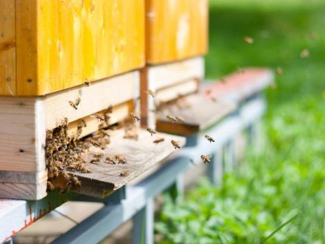 Soha nem látott környezeti katasztrófa rázta meg Horvátországot: 50 millió méh pusztult el