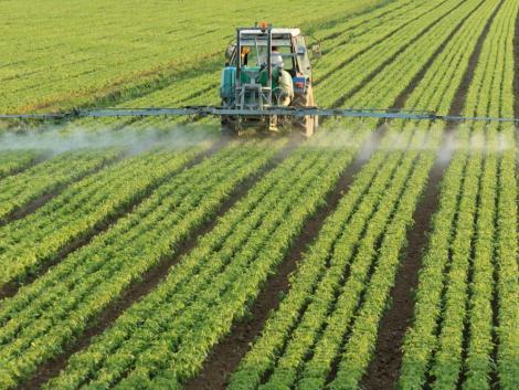 Csütörtökig érdemes elvégezni a növényvédelmi munkákat