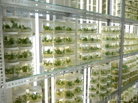 A növények