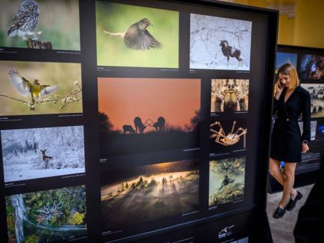 Megnyílt a Varázslatos Magyarország természetfotó-kiállítás