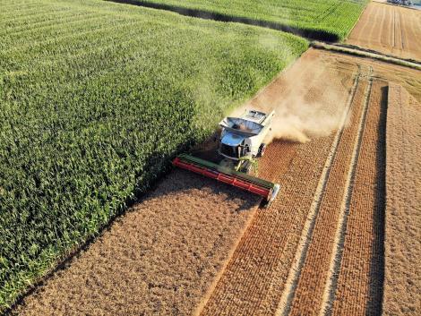 Figyeljünk oda aratás közben! Ezek a leggyakoribb veszélyforrások