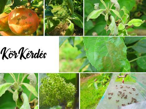 Vegyük sorra az aktuális növényvédelmi teendőket az ültetvényekben