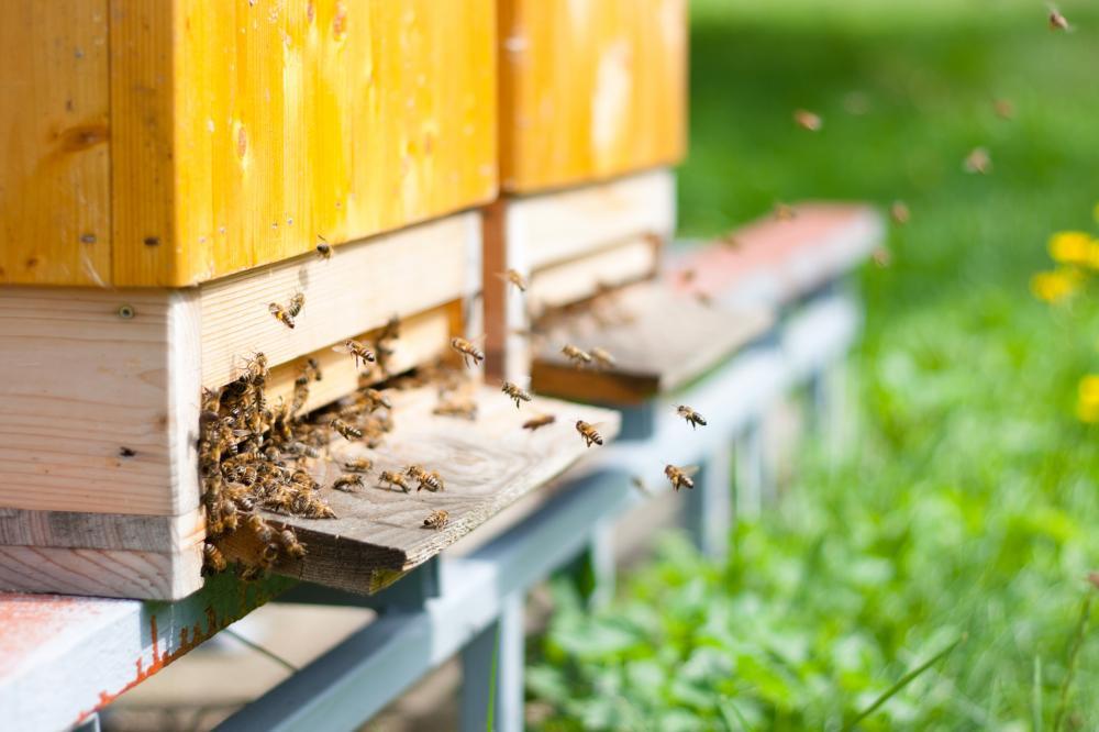 méhek