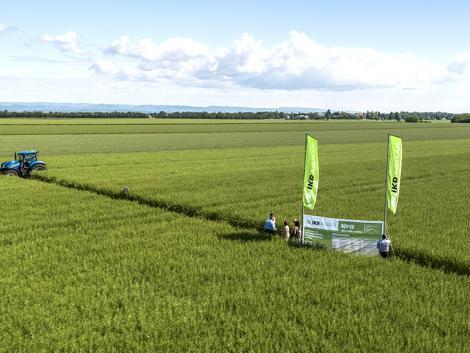 IKR Agrár online repcebemutató: kiemelkedő termés szélsőséges évjáratokban is, megfelelő technológiával