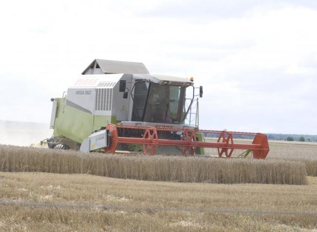 Bosszankodhatnak a gazdák: nem kedvez az időjárás az aratásnak
