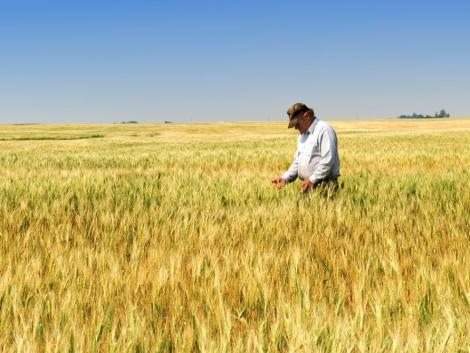 Nem a koronavírus okozta a legnagyobb gondot a gabonatermesztőknek