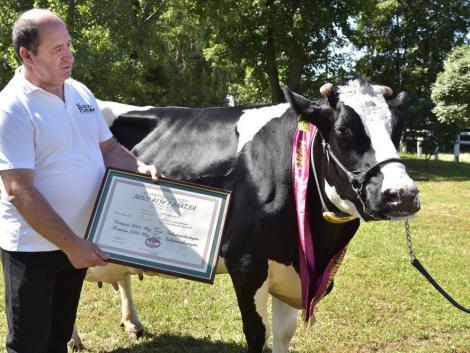 100 ezer kg tejet adott Fáklya, a holstein-fríz tehén