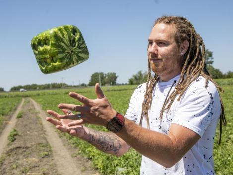 Itt a legújabb őrület, a dobókocka alakú görögdinnye