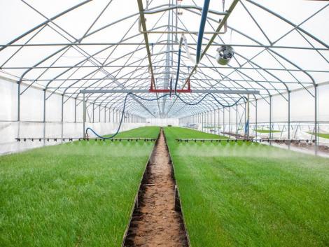 Megjelent a rendelet: így lehet a fűtött növény- és gombaházakra támogatást igényelni