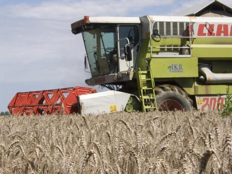 Alig kezdődött el az aratás, de már most látszik: közepesnél is gyengébb termés várható