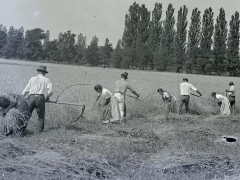 Margit napja idén is megzavarja az aratást? Júliushoz kötődő népi hagyományok