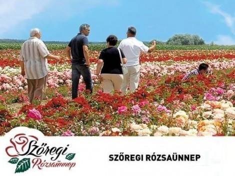 Rózsaünnep kezdődik Szőregen