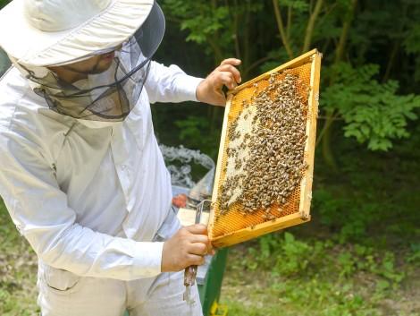 A méhészetek jövőjét is kiemelten szolgálják a támogatások