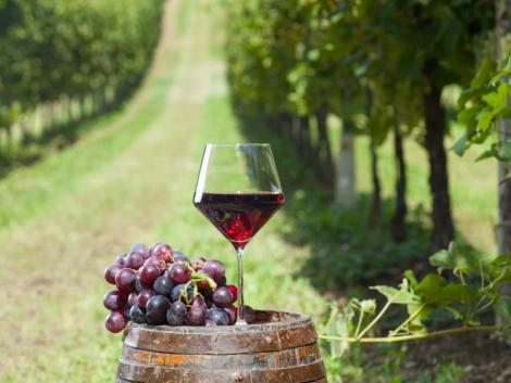 Megszavazták: újabb rendkívüli intézkedésekkel támogatja a borágazatot az EU
