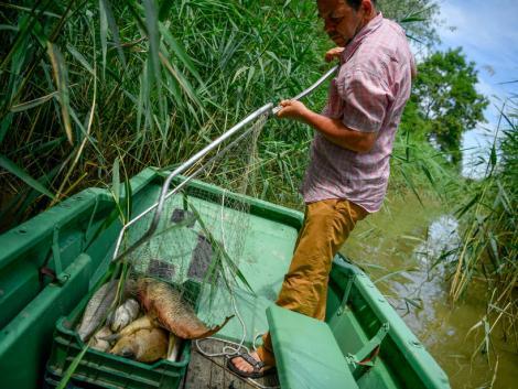 Közel 6-7 mázsa hal pusztult el a Hortobágy folyóban