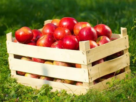 Rekordmagasan a kínai almatartalékok