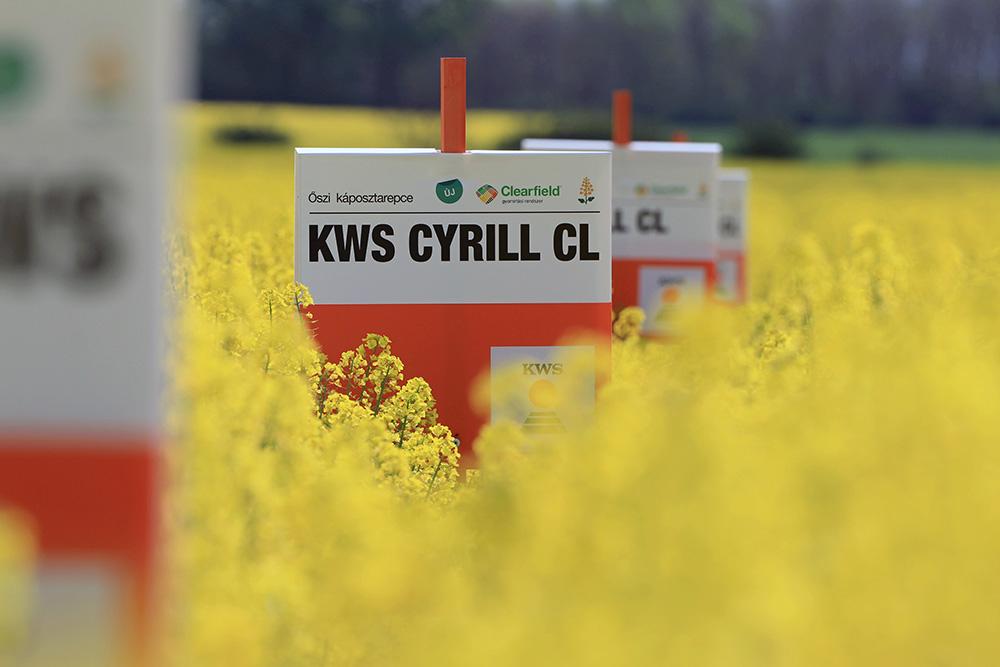KWS Cyrill CL repcehibrid