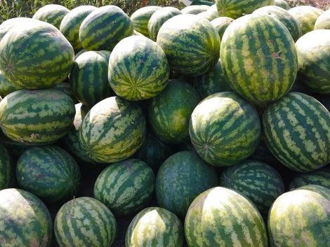 Szombattól kizárólag magyar beszállítótól vesz át görögdinnyét a Lidl
