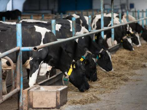 Akár 100 százalékos kamat- és díjtámogatás az agrárvállalkozásoknak az MFB-től