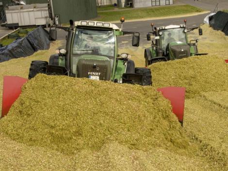 Önnek mennyit tejel a kukoricaszilázsa?
