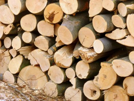 Új EUTR informatikai alrendszerek a faanyagkereskedelmi lánc szereplők számára