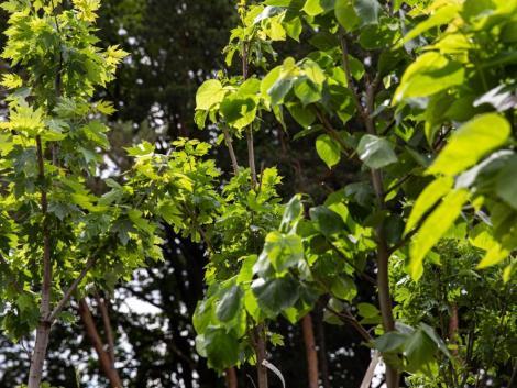 12 000 sorfával zöldülnek a hazai kistelepülések